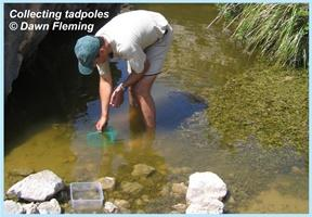 Collecting tadpoles